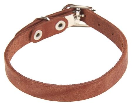 Ошейник кожаный однослойный, 30 х 1 см, коричневый  Compаnion