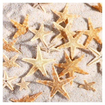 Набор натуральных морских звезд, 1,5 - 2,5 см, 20 шт  КНР
