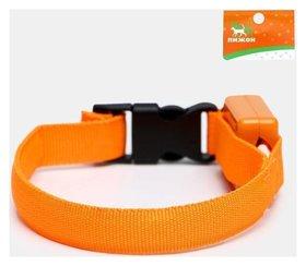 Ошейник светящийся узкий для небольших собак, 26 х 1,5 см, оранжевый  Пижон