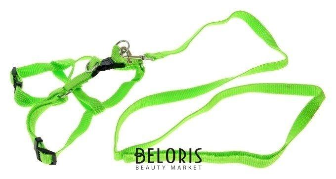 Комплект Базис, поводок 120 х 1,5 см, шлейка 32-46 х 1,5 см, зеленый Пижон