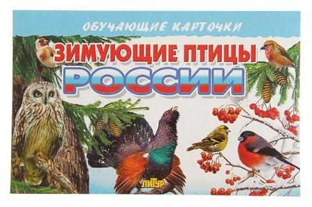 Обучающие карточки «Зимующие птицы россии», 16 карточек  Литур