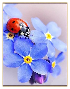 Алмазная мозаика «Незабудки», 29 цветов  Milato