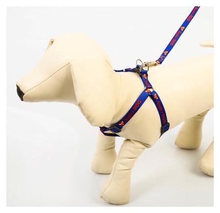 Комплект Super Dog: шлейка 28-47 см, поводок 120 см, макс вес 10 кг  Пушистое счастье