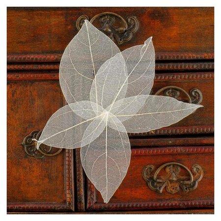 Сухие листья, (Набор 5 шт), размер 1 шт:: 8×5 см, цвет белый  Школа талантов