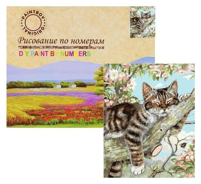 Картина по номерам «Кот»лежебока» Paintboy