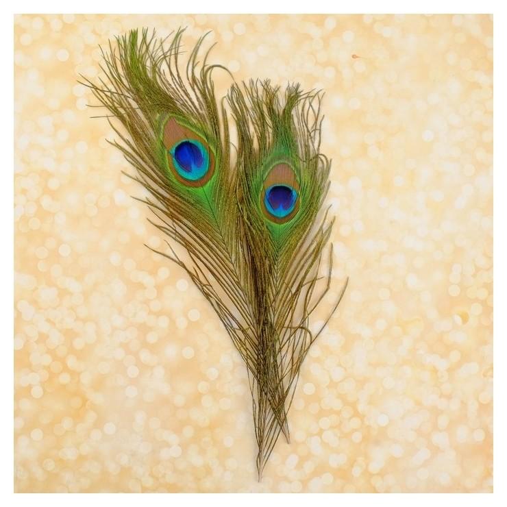 Набор перьев павлина для декора 2 шт.  Школа талантов