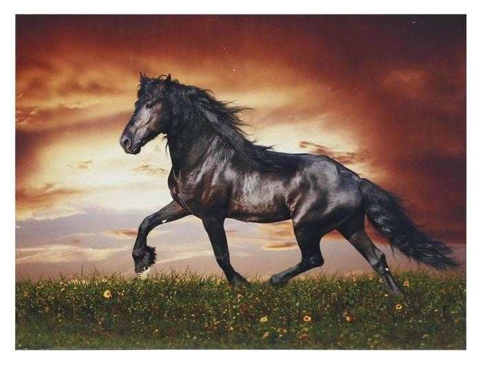 Картина Лошадь 30*40 см NNB