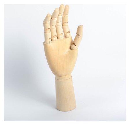 Модель деревянная художественная манекен «Рука мужская правая» 31 см  Calligrata