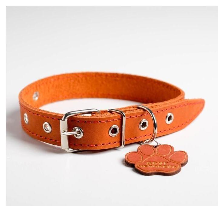 Ошейник кожаный однослойный, 31 - 52см, 58 х 2.5 см, апельсин  Пушистое счастье