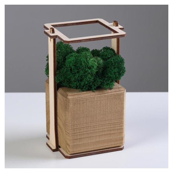 """Кашпо композиция со мхом """"Бриовуд"""", мох стабилизированный: Forest Green (Зелёный лес)  NNB"""