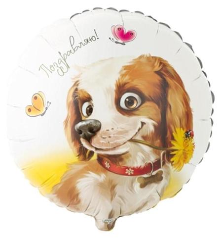 """Шар фольгированный 18""""круг""""поздравляю. собака с цветком""""  Веселая затея"""