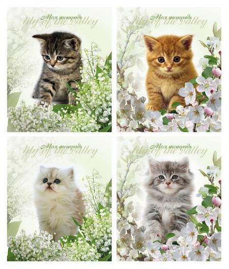 Тетрадь школьная а5,24л,клетка котята и цветы диз.в асс. тш24к9478  Мировые тетради