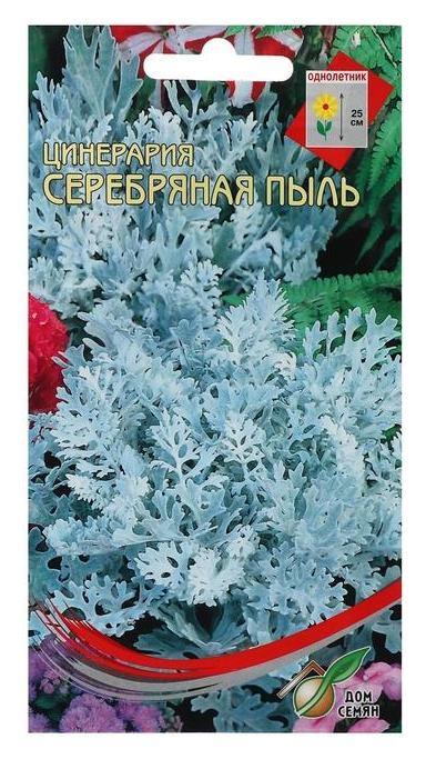 Семена цветов цинерария Серебряная пыль Дом семян, О, 130 шт Сортсемовощ
