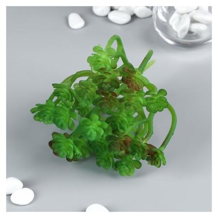 """Искусственный суккулент для создания флорариума """"Оскулярия зелёная"""" 12,5х12х10 см  NNB"""