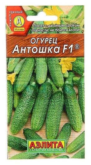 Семена огурец Антошка F1, партенокарпический, 0,3 г( 10 шт.) Аэлита