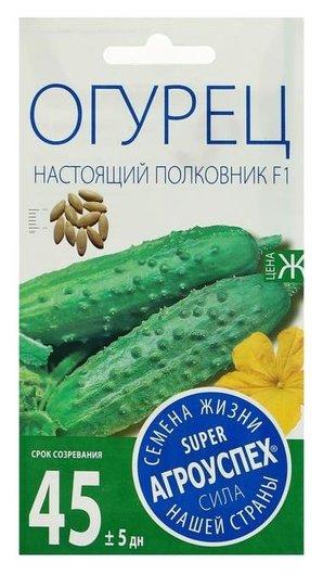 Семена огурец настоящий полковник F1, ранний, партенокарпический, 8 шт  Агроуспех