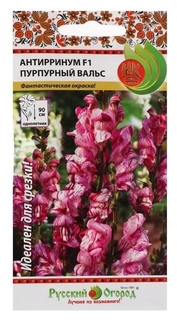Семена цветов антирринум «Пурпурный вальс», F1, 10 шт  Русский огород