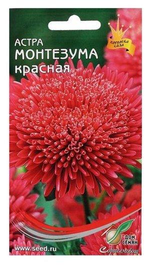 Семена цветов астра Монтезума, красная, 100 шт Сортсемовощ