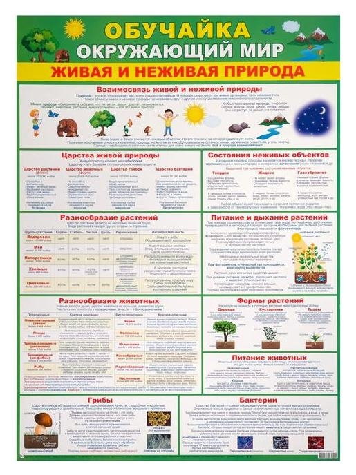 """Плакат """"Обучайка окружающий мир"""" зеленый фон, А2  Мир открыток"""