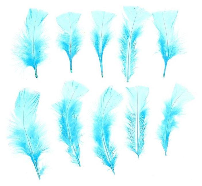 Набор перьев для декора 10 шт., размер 1 шт: 10 × 4 см, цвет голубой NNB