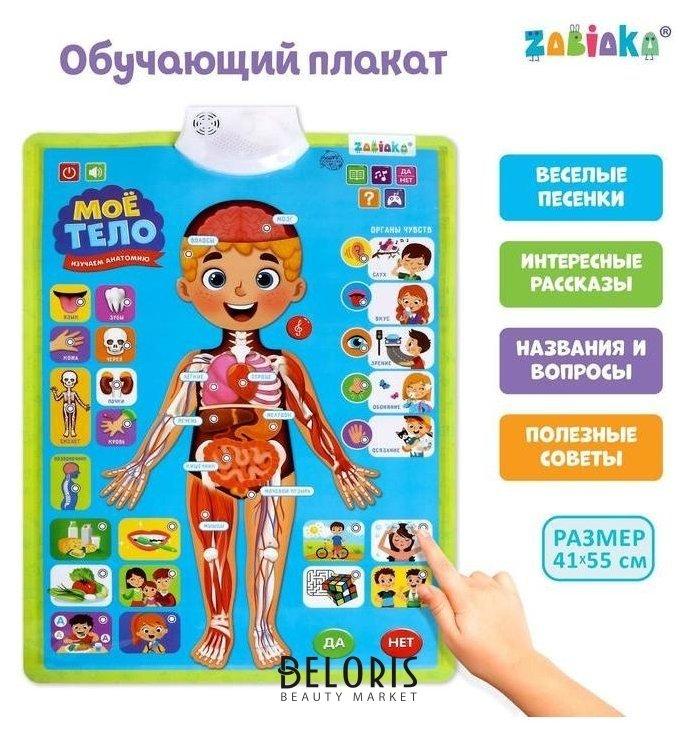 Обучающий плакат «Изучаем анатомию: Моё тело» Zabiaka